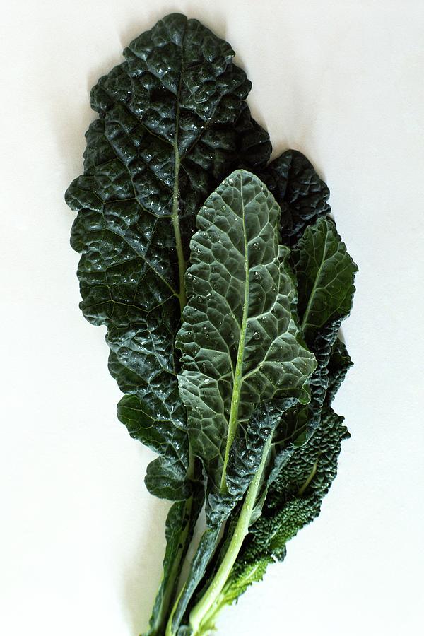 Lacinato Kale Photograph by Romulo Yanes