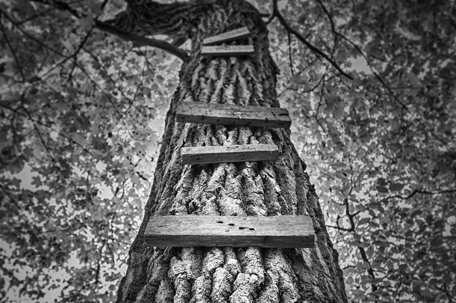 Tree Photograph - Ladder to the Treehouse by Scott Norris