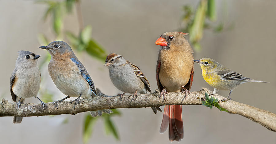 Birds On Branch Photograph - Ladies Auxiliary by Bonnie Barry