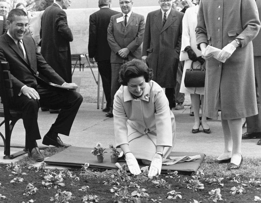 1965 Photograph - Lady Bird Johnson Planting by Underwood Archives
