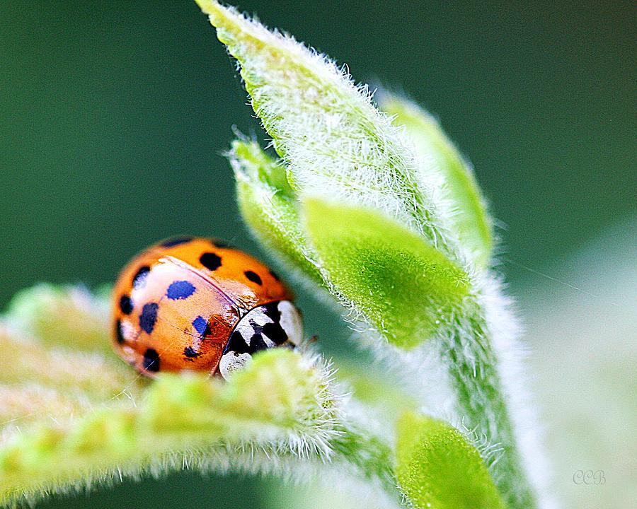 @cathy.ladybug