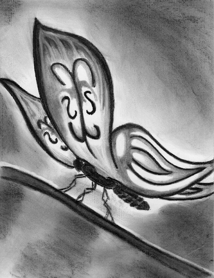 Butterfly Drawing - Lady Ghostwing by Angie Brown