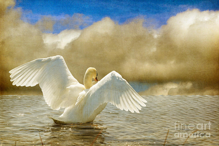 Swans Photograph - Lady-in-waiting by Lois Bryan
