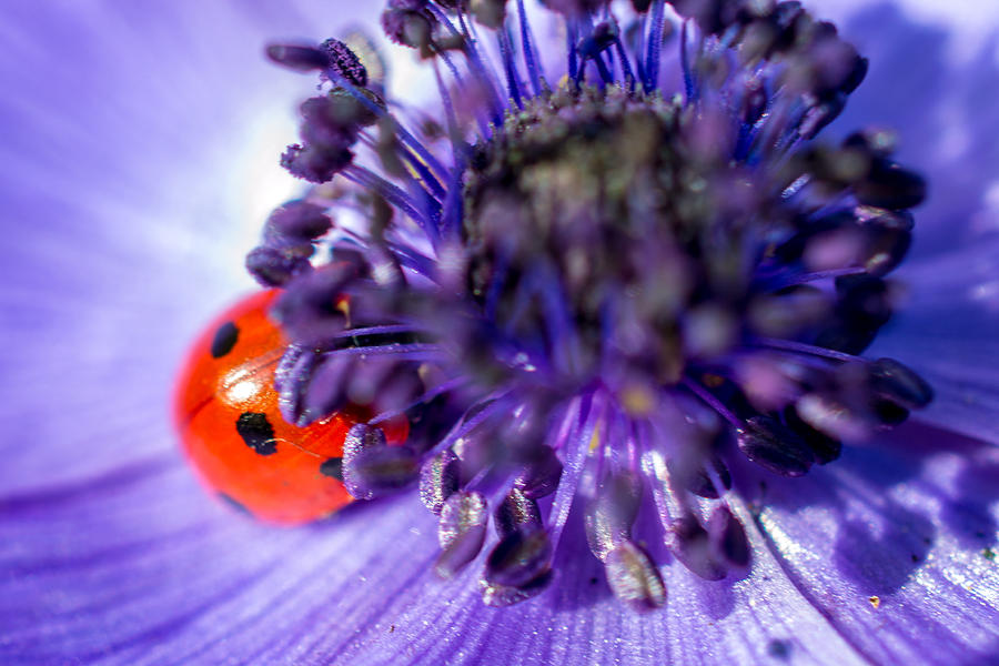 Ladybird Photograph - Ladybird Having A Snooze by Andrew Lalchan