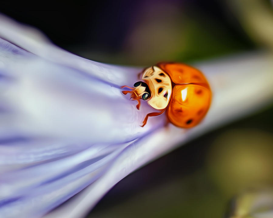 Photograph - Ladybug Art by Tammy Smith