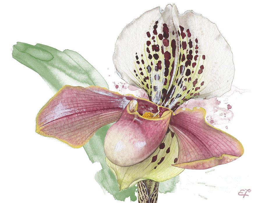 Bloom Painting - Ladys Slipper - Orchid 14 - Elena Yakubovich by Elena Yakubovich