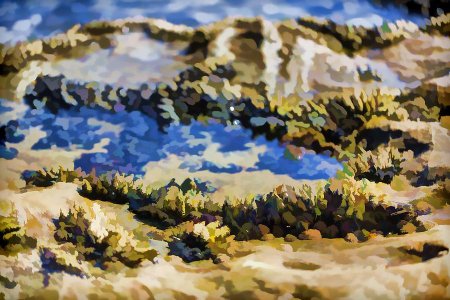 Black Turban Snail Photograph - Laguna Beach Tide Pool Pattern 3 by Scott Campbell