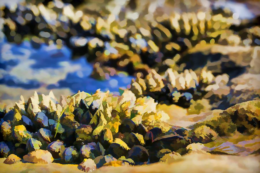 Black Turban Snail Photograph - Laguna Beach Tide Pool Pattern 4 by Scott Campbell