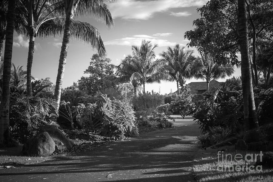 Lahaina Photograph - Lahaina Palm Shadows by Sharon Mau