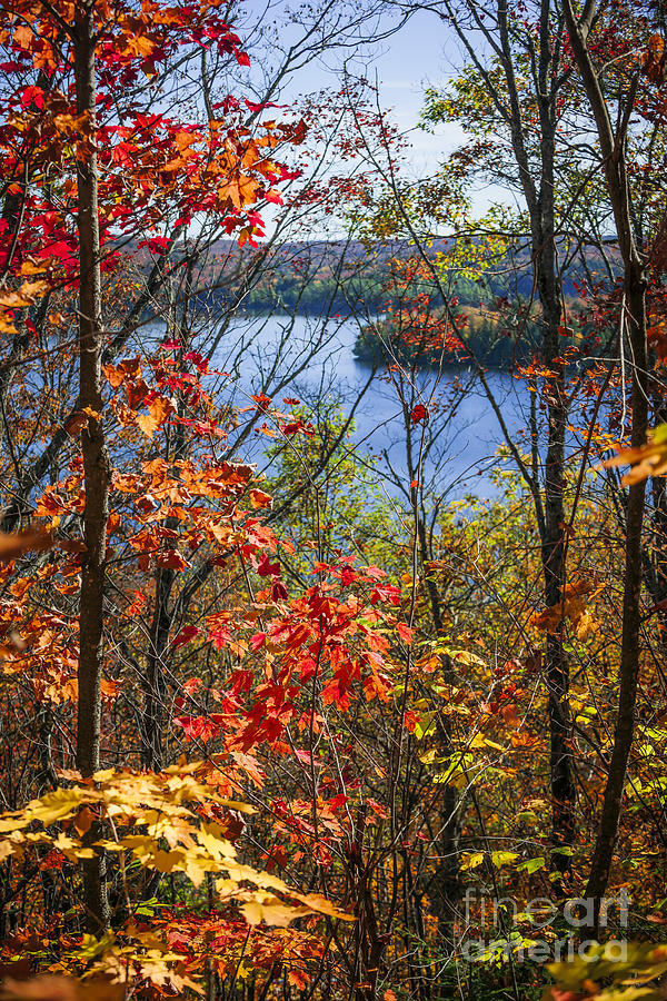 Forest Photograph - Lake and autumn forest by Elena Elisseeva