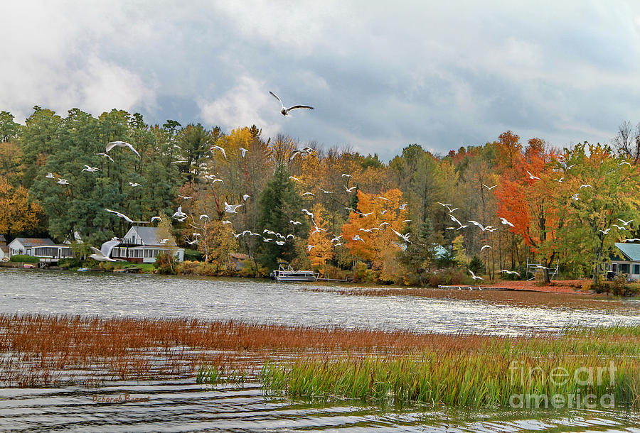 Vermont Photograph - Lake Carmi Autumn 2012 by Deborah Benoit