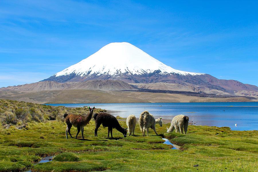Lake Photograph - Lake Chungara Chilean Andes by Kurt Van Wagner
