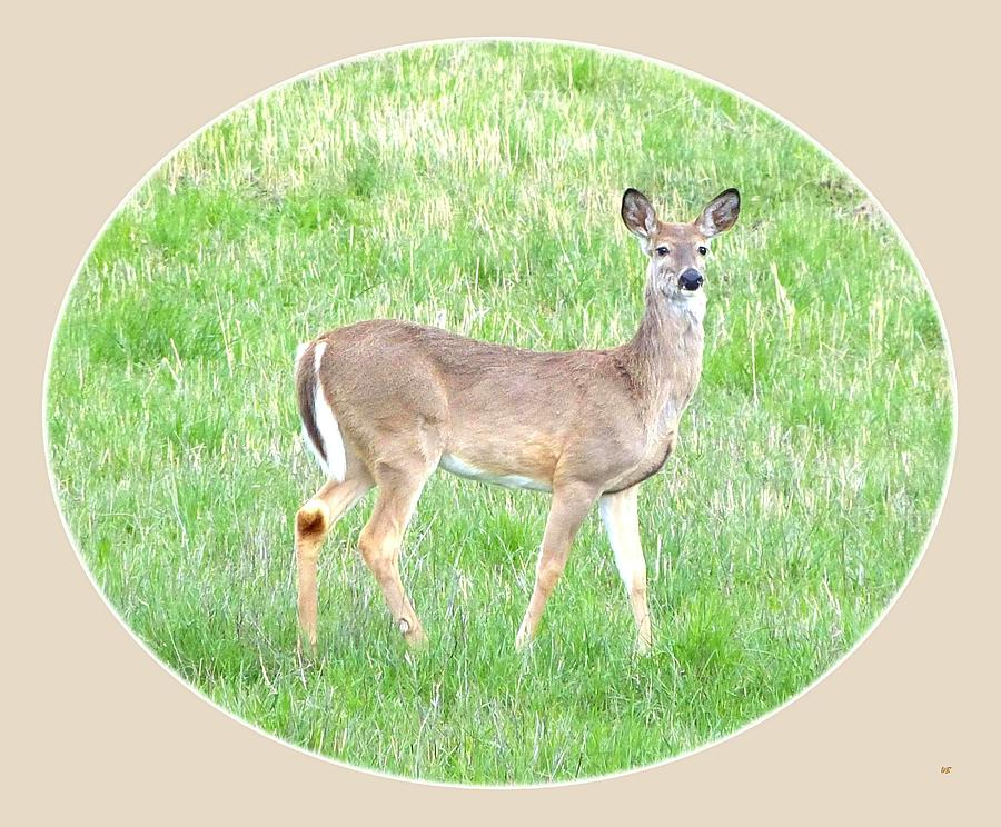 Deer Photograph - Lake Country Doe   by Will Borden
