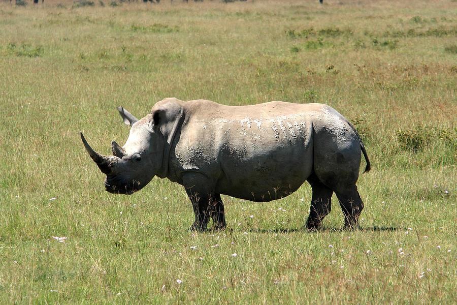 Africa Photograph - Lake Nakuru White Rhino by Aidan Moran