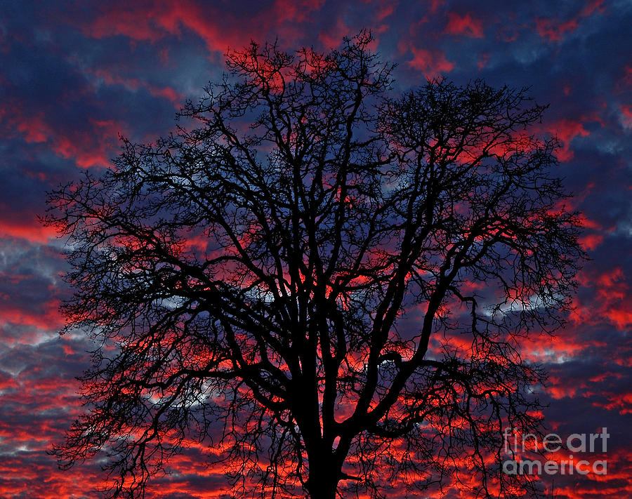 Pacific Photograph - Lake Oswego Sunset by Nick  Boren