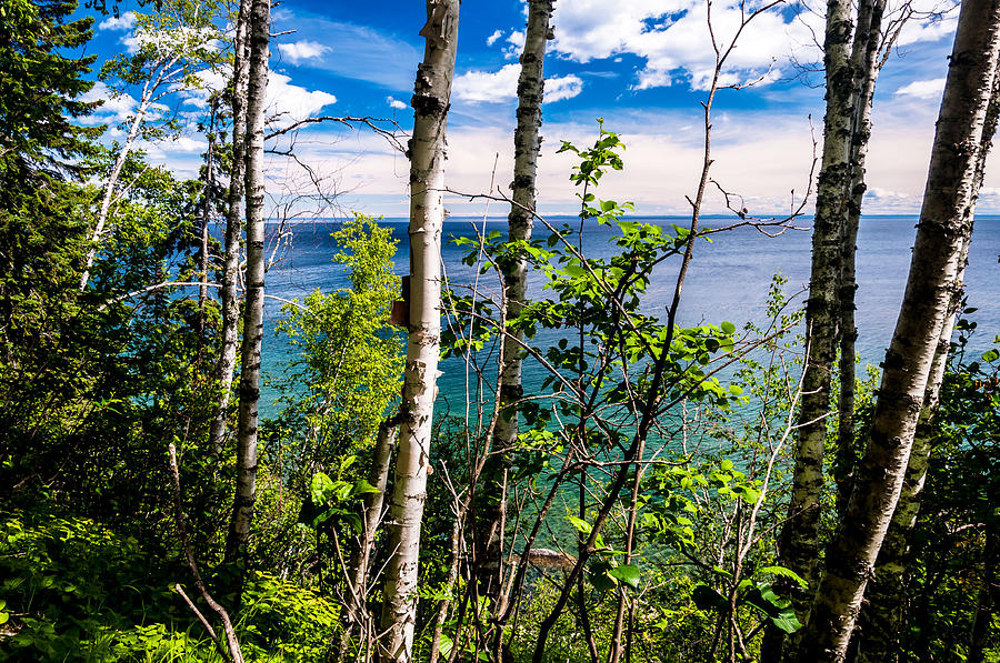 Lake Superior Birch Trees Photograph by Lonnie Paulson