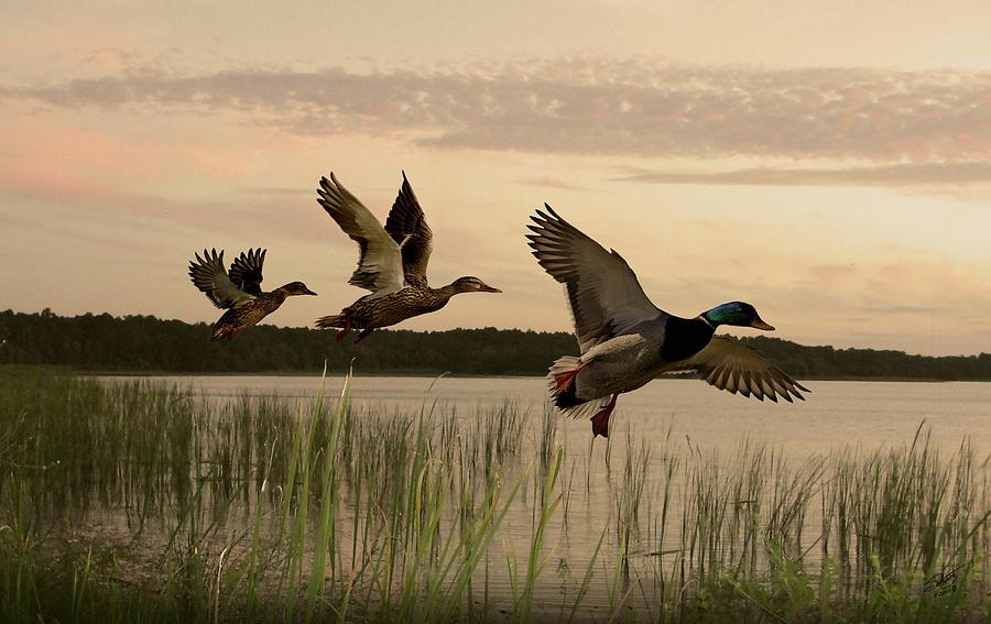 Ducks Digital Art - Lake Tarpon Ducks by IM Spadecaller