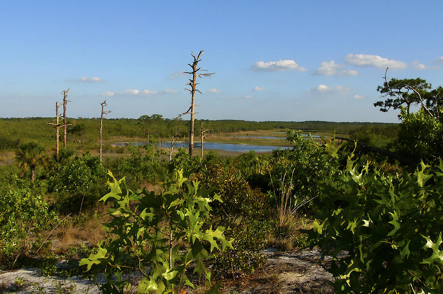 Blue Sky Photograph - Lake View II. Lake Wales Ridge. by Chris  Kusik