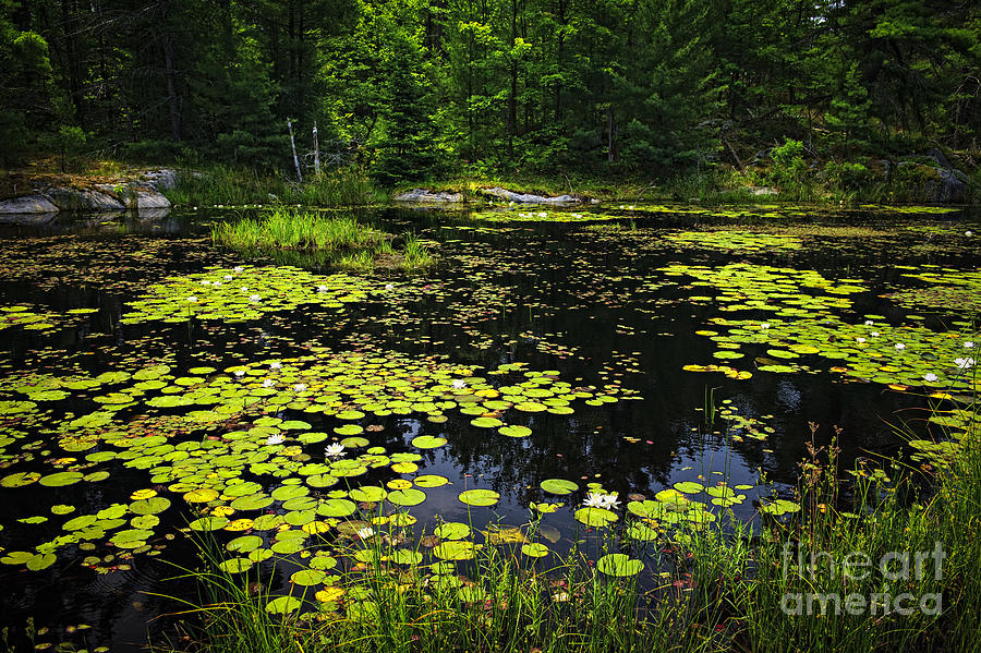 Lake Photograph - Lake With Lily Pads by Elena Elisseeva