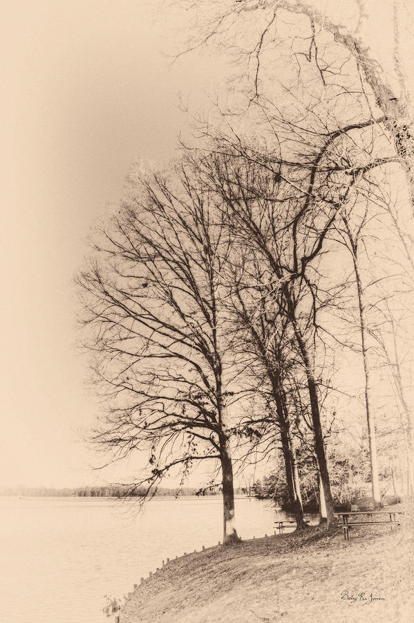 Black And White Photograph - Lakeshore Park by Barry Jones