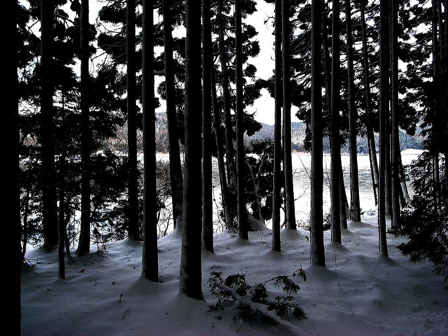 Lakeside Cedar Forest With Snow Photograph by Photographer, Loves Art, Lives In Kyoto