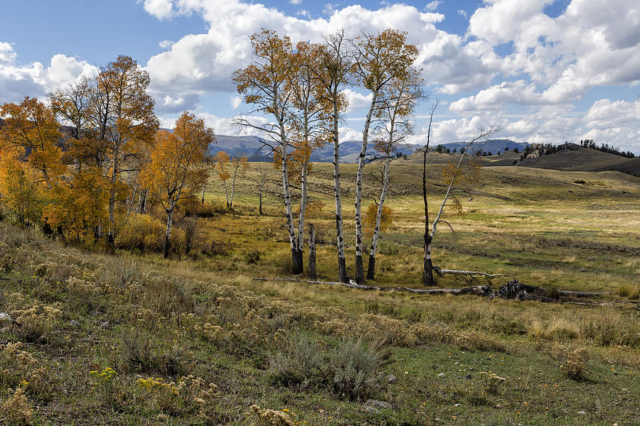 Yellowstone Photograph - Lamar Valley In The Fall - Yellowstone by Belinda Greb