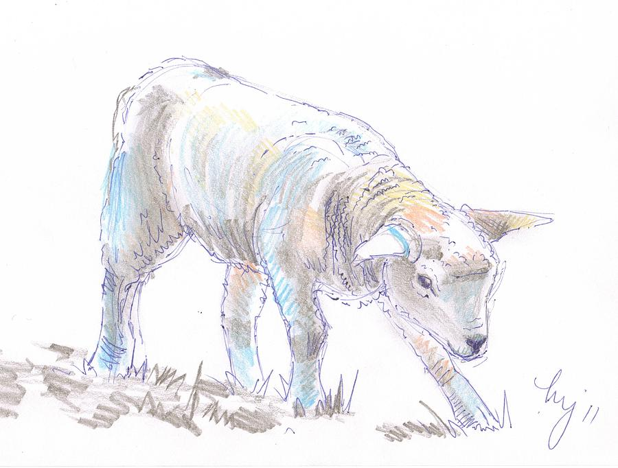 Lamb Sketch Drawing By Mike Jory