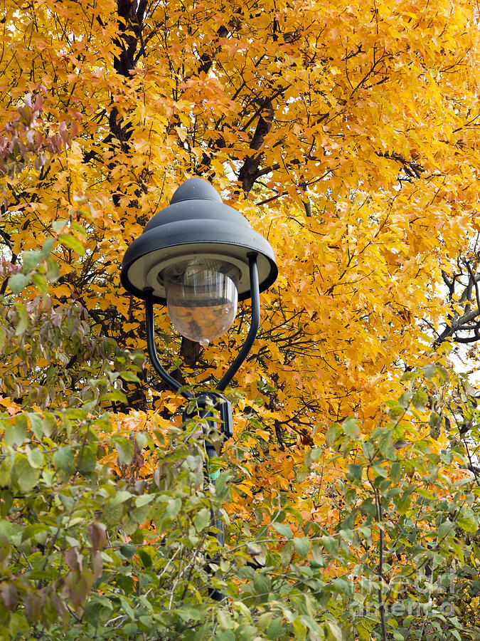 Autumn Photograph - Lamp In The Autumn Leaves by Michal Boubin