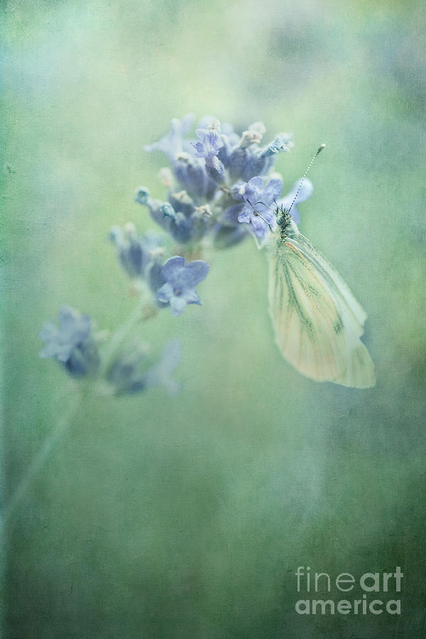 Butterfly Photograph - Land Of Milk And Honey by Priska Wettstein