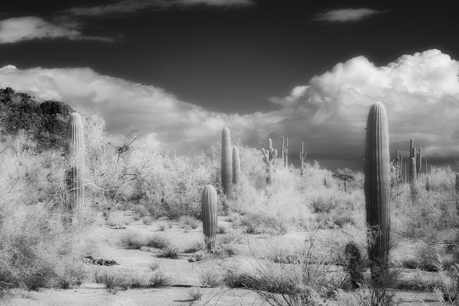 Saguaro Photograph - Land Of The River People by Hugh Smith