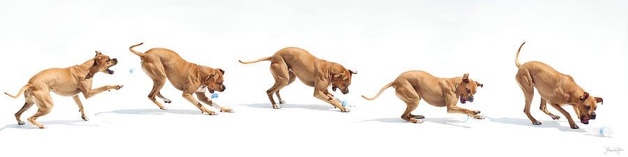 Dog Photograph - Landfill Kill by Bonita Ash