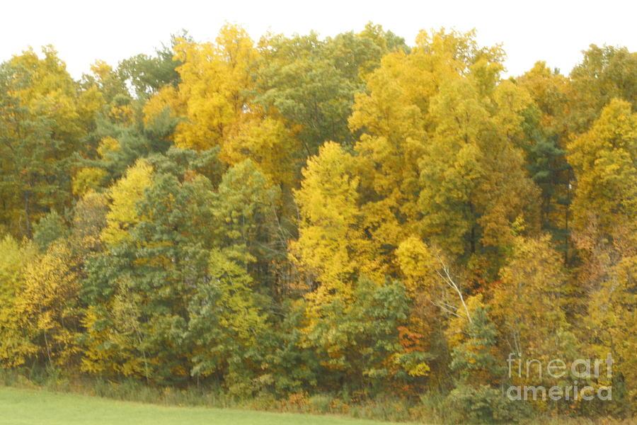 Yellow Landscape Photograph - Landscape by Arelys Jimenez