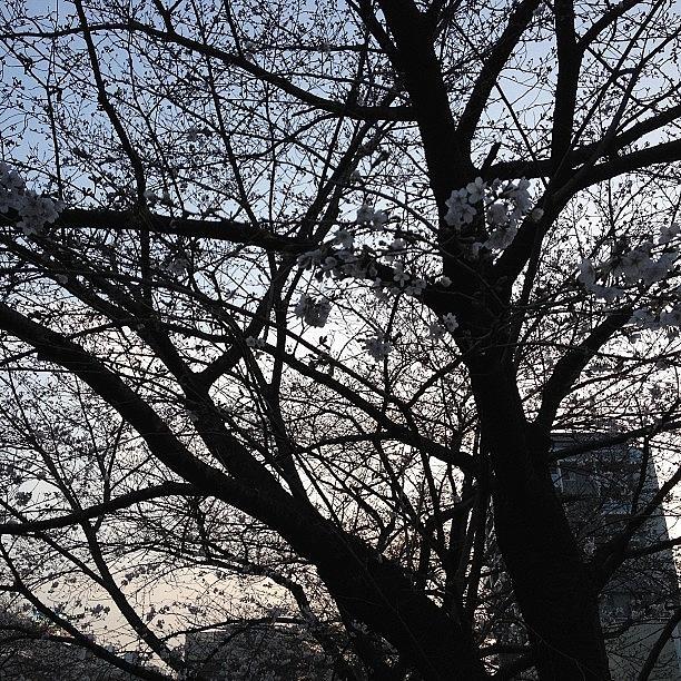 Landscape Photograph - #landscape #cherryblossom S by Tokyo Sanpopo