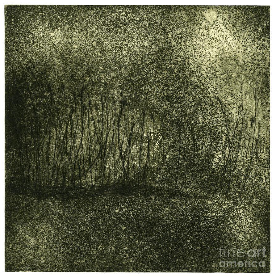 Mystical Landscape - Plants -reed - Botany - Biotope - Habitat - Etching - Fine Art Print - Stock Image Painting