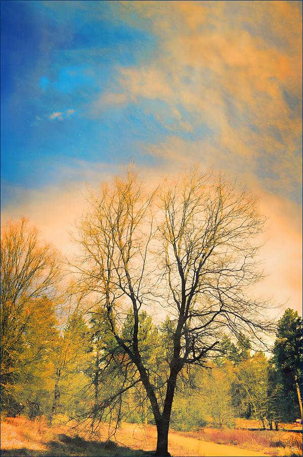 Landscape Photograph - Landscape In Blue And Yellow  by Douglas MooreZart