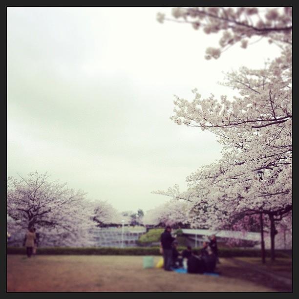 Japan Photograph - #landscape #japan Hanami by Tokyo Sanpopo