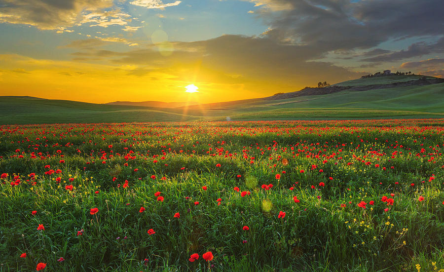 Landscape with poppies in Tuscany, Italy at sunset Photograph by Mammuth