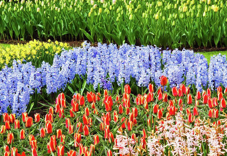 Landscape With Tulips Keukenhof Gardens Photograph by Xenotar