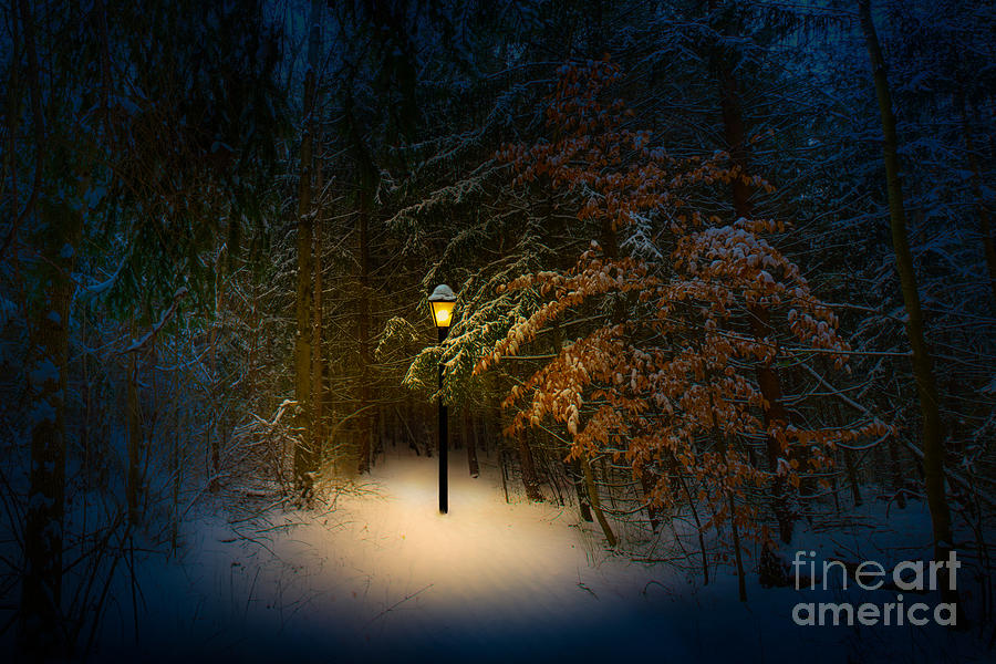Lantern In The Wood by Michael Arend