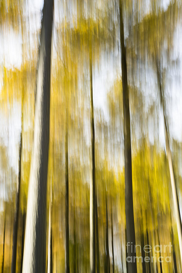 Abstract Photograph - Larch In Abstract by Anne Gilbert