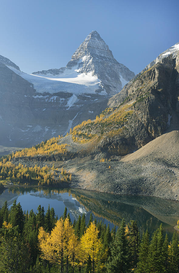 Larch Trees Mt Assiniboine And Sunburst Photograph by Kevin Schafer