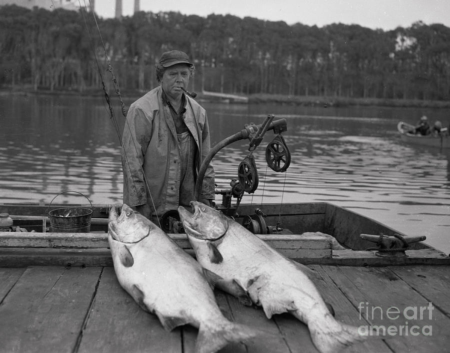 Large King Salmon Moss Landing Monterey California Circa 1955 by California Views Archives Mr Pat Hathaway Archives
