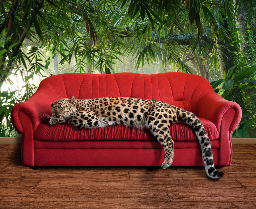 Large Pussy Cat - Leopard Sleeping Photograph by Kerrick