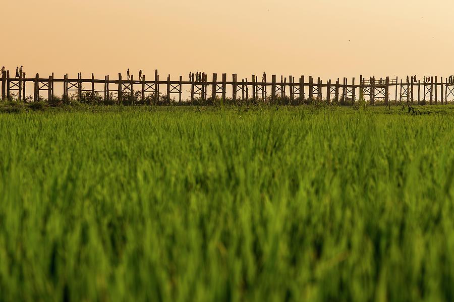 Large Rice Paddy Below U Bein Bridge Photograph by Merten Snijders