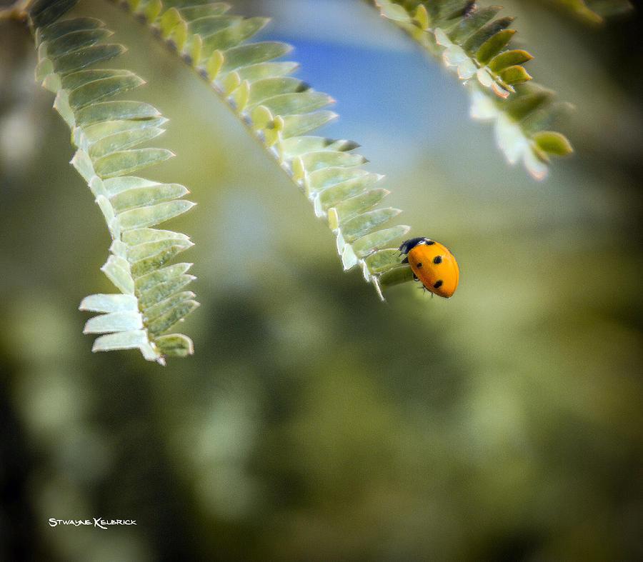 Coronavirus Photograph - Last Breath by Stwayne Keubrick