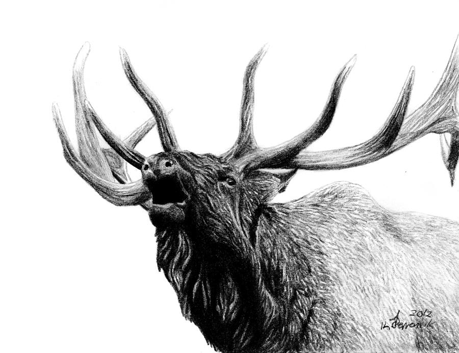 Elk Drawing - Last Cry by Kayleigh Semeniuk