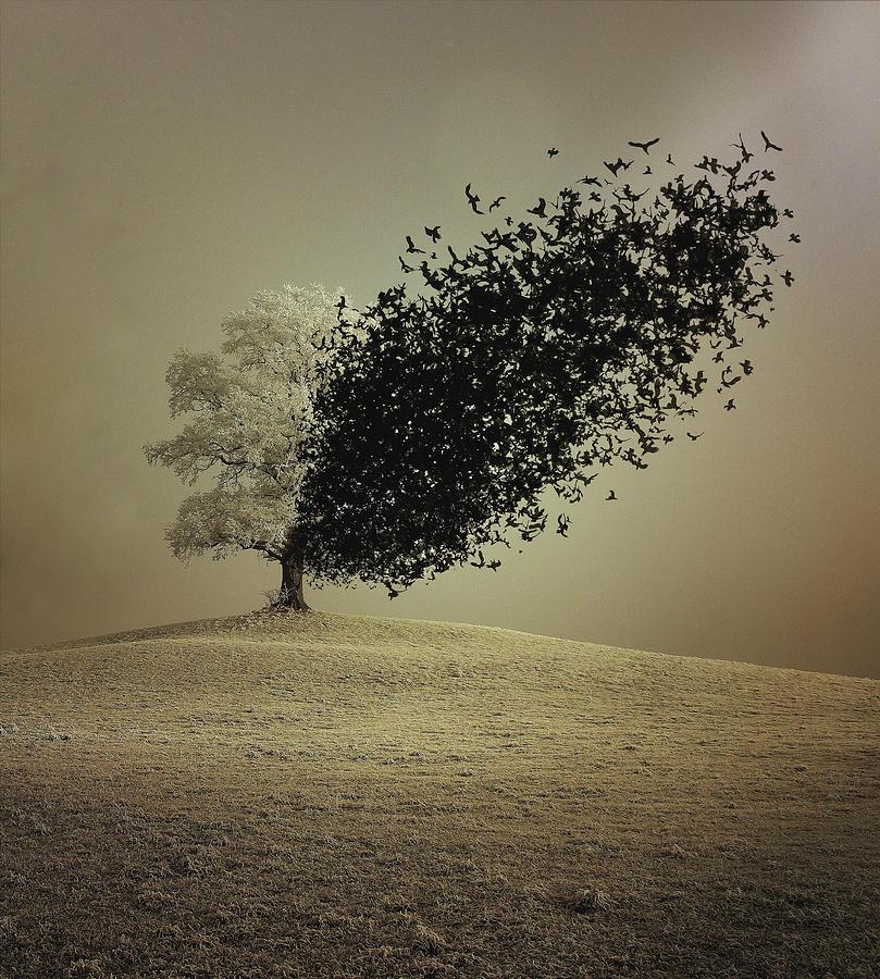Conceptual Photograph - Last Hope by Radin Badrnia