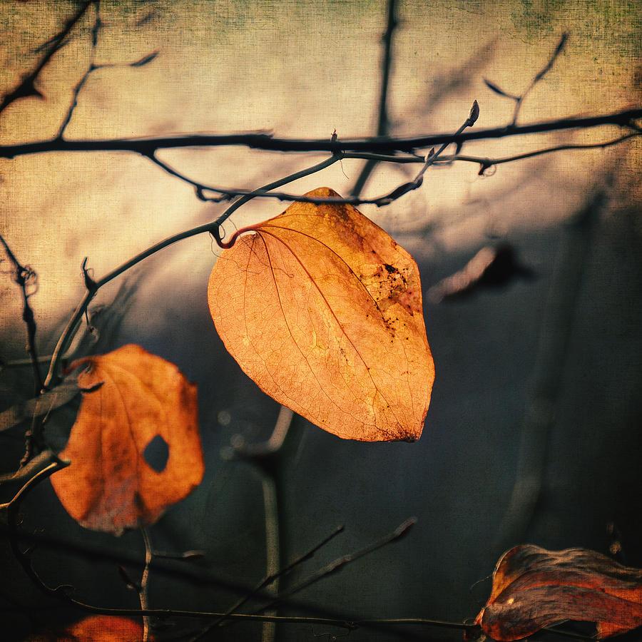 Leaf Photograph - Last Leaves by Taylan Apukovska