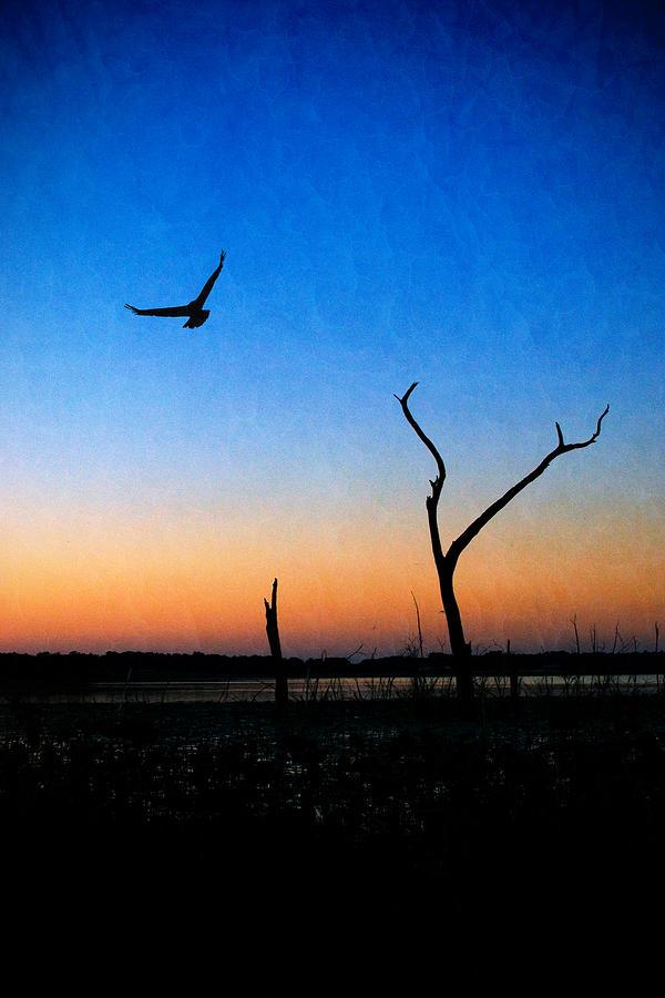 Last Light by Beverly Stapleton