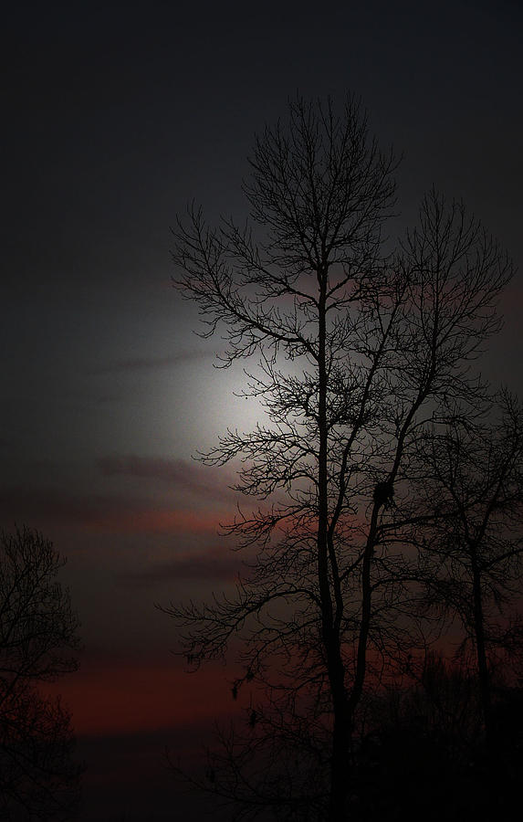 Evening Sky Photograph - Last Light by Ella Char
